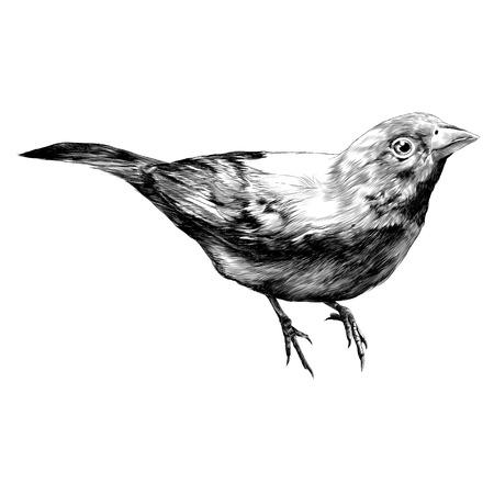 vogel amarant schets vectorafbeeldingen monochroom