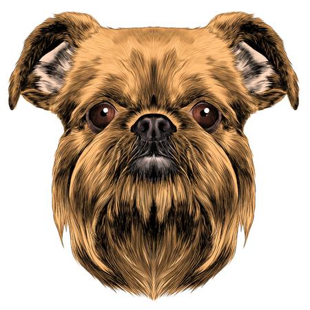 犬の品種はブリュッセル ・ グリフォン ベクトル グラフィックス色のスケッチ
