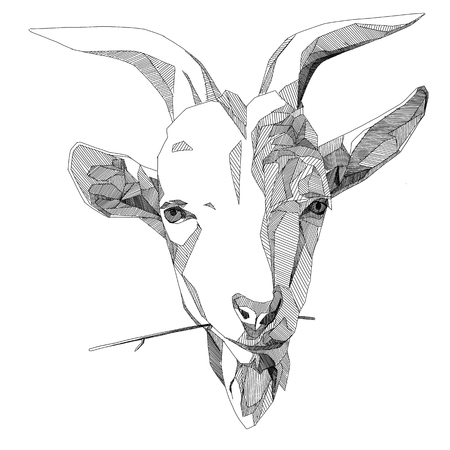 RAM head sketch vector graphics monochrome black-and-white