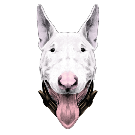 dog head breed bull Terrier sketch vector graphics colors