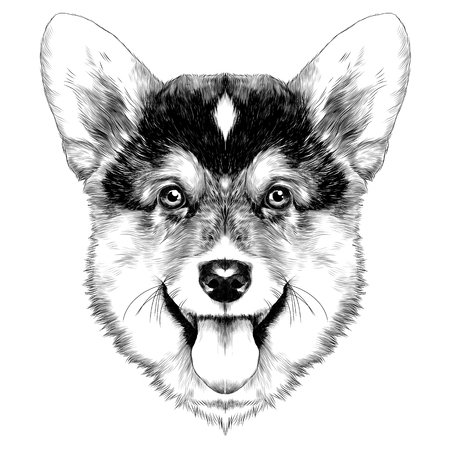 dog breed Welsh Corgi sketch vector graphics monochrome Christmas bump