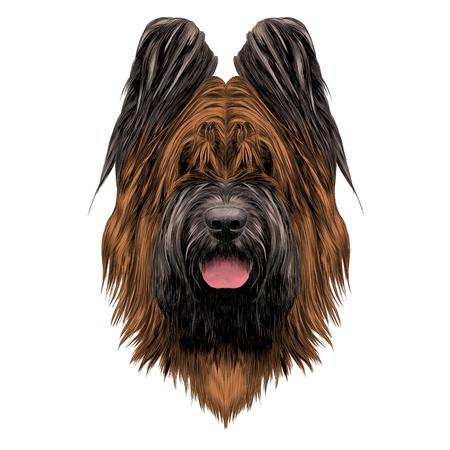 Dog breed Briard sketch vector graphics Çizim
