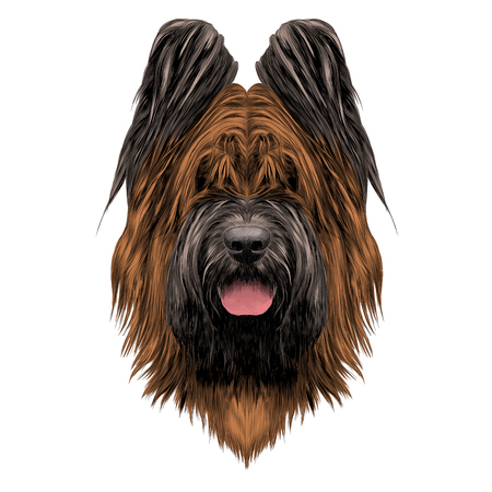Dog breed Briard sketch vector graphics Illustration