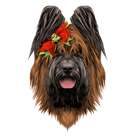 dog breed Briard sketch vector graphics color with bow