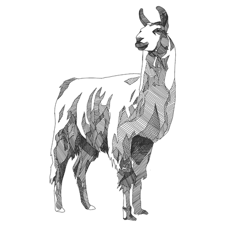 Lama gráfico de gráficos vectoriales en blanco y negro monocromo Foto de archivo - 84926140