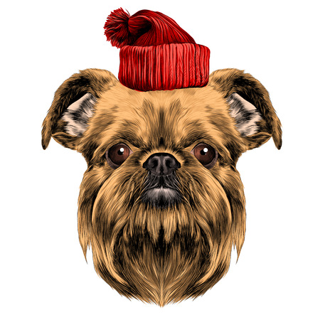 dog breed Brussels Griffon vector graphics colored sketch with hat new year holiday