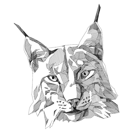 lynx head sketch vector graphics monochrome Illustration