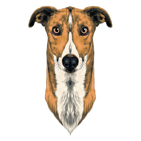 dog breeds Greyhound grass sketch vector graphics color