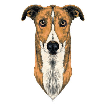 dog breeds Greyhound grass sketch vector graphics color
