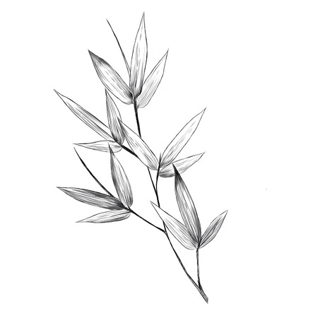 Bamboo leaves sketch graphics design.