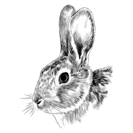 Bunny hoofd schets grafische illustratie.