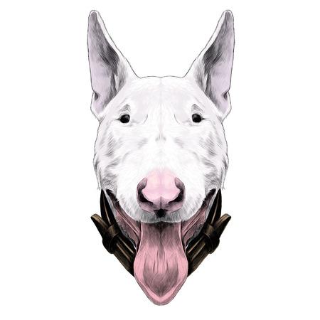 Dog head breed bull Terrier sketch graphic illustration.