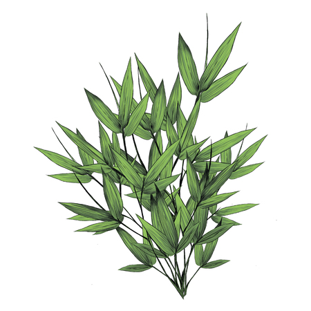 Bamboo leaves a lot of sketch graphic illustration.