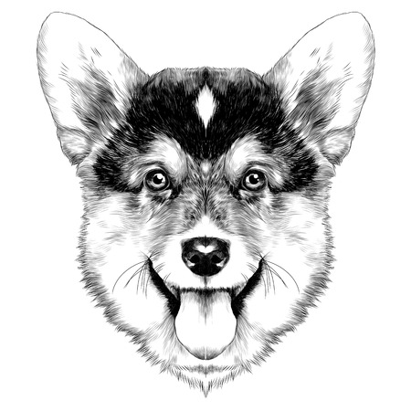 개 품종 웨일스 어 Corgi 스케치 그래픽 그림입니다. 일러스트