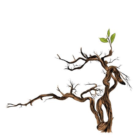 Dry branch sketch graphic illustration.