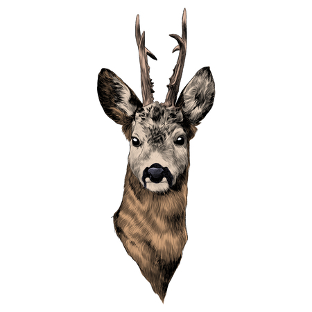 鹿のスケッチグラフィックイラスト。  イラスト・ベクター素材