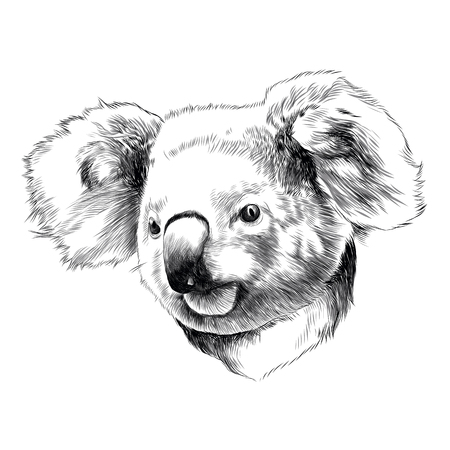 Koala head drawing sketch graphic illustration.