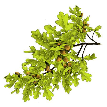 Oak branches sketch graphic illustration.