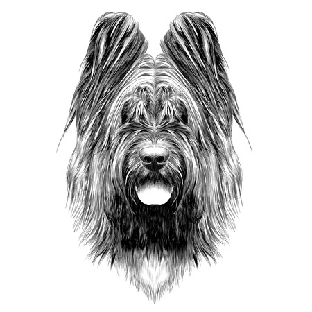 Dog breed Briard sketch graphic illustration. Illustration