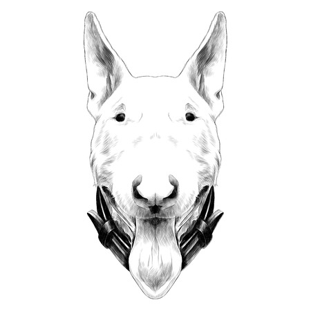 Dog head breed bull Terrier sketch graphic illustration.
