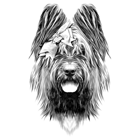 Dog breed Briard sketch graphic illustration. Çizim