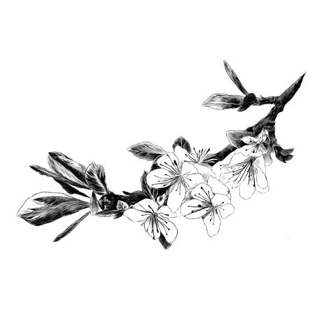 ツリースケッチグラフィックイラストの枝。