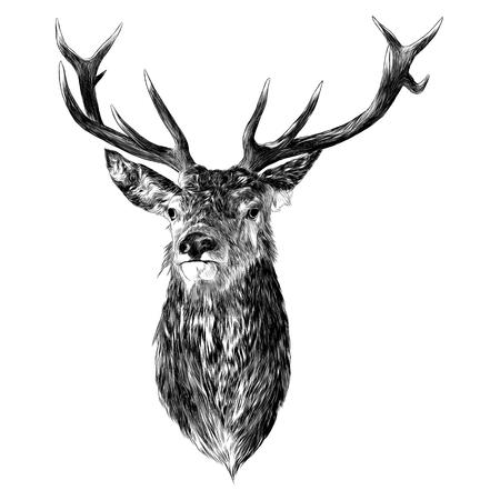 Deer sketch graphic illustration.