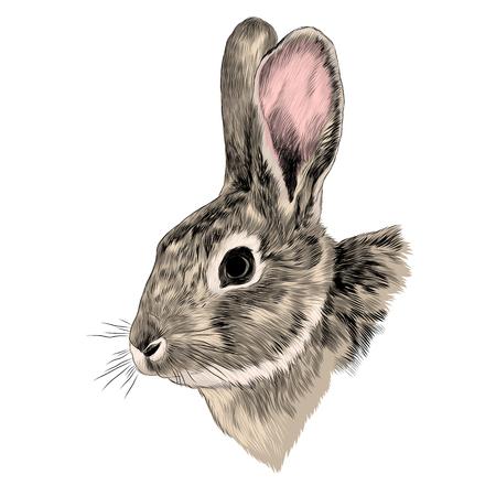 Rabbit head grey sketch graphic illustration. Illustration