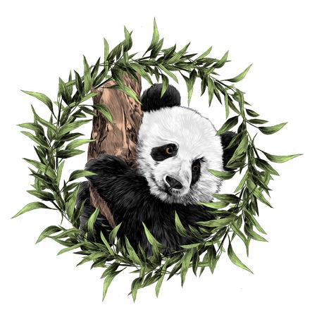 Panda schets grafische illustratie.