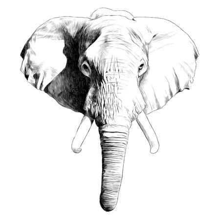 象の頭のスケッチグラフィックイラスト。  イラスト・ベクター素材
