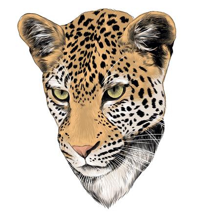 Leopard head graphic illustration.  イラスト・ベクター素材