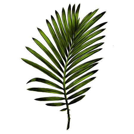 Branch of a palm tree graphic illustration.