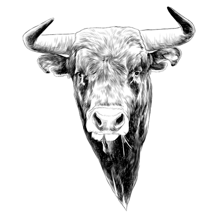 Bull sketch graphic illustration.