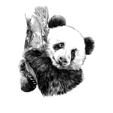 パンダは、グラフィック デザインをスケッチします。