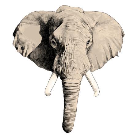 象の頭のスケッチグラフィックデザイン。