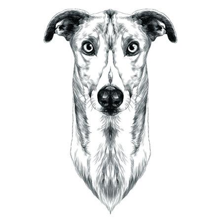 Greyhound sketch graphic design.
