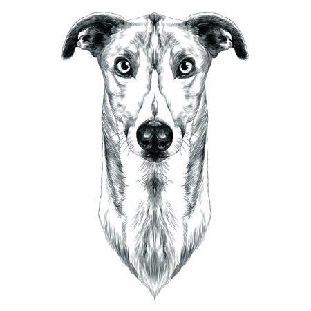 Greyhound sketch graphic design.