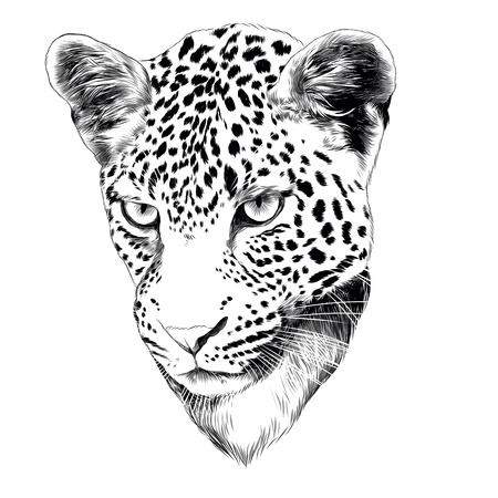 Leopard head drawing sketch sketch graphic design.