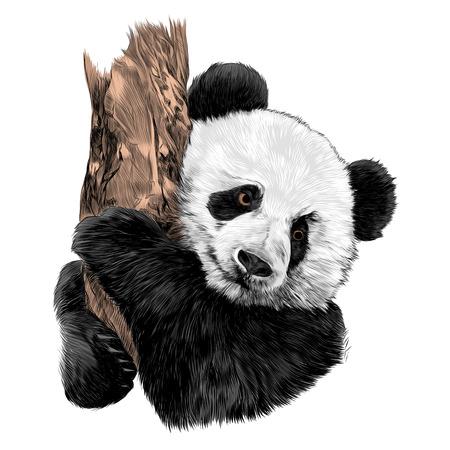 Panda boceto dibujo diseño gráfico. Ilustración de vector