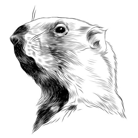 Groundhog sketch sketch graphic design. Illustration