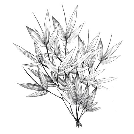 竹はスケッチグラフィックデザインを残します。