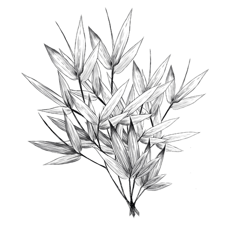 Bamboo leaves sketch graphic design.