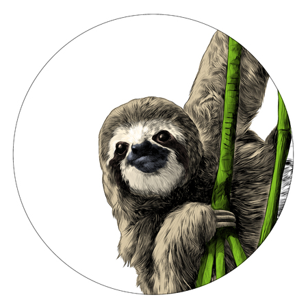 Sloth sketch graphic design. Ilustrace