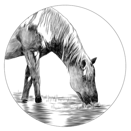 Horse head sketch graphic design. 向量圖像