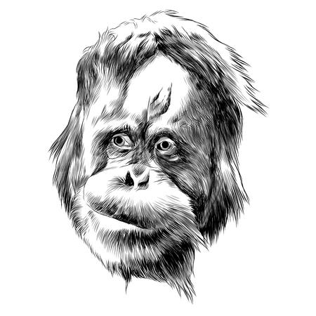 오랑우탄 원숭이 스케치 그래픽 디자인.