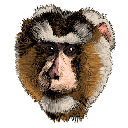 Monkey head sketch graphic design. Stock Illustratie