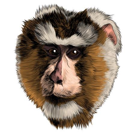 Monkey head sketch graphic design. Ilustração