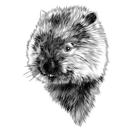 Wombat cabeza dibujo diseño gráfico.