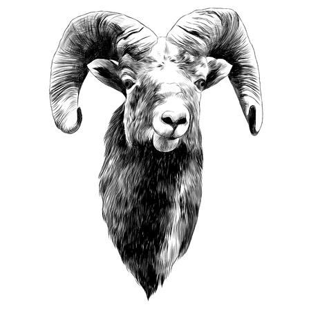 羊のスケッチグラフィックデザイン。