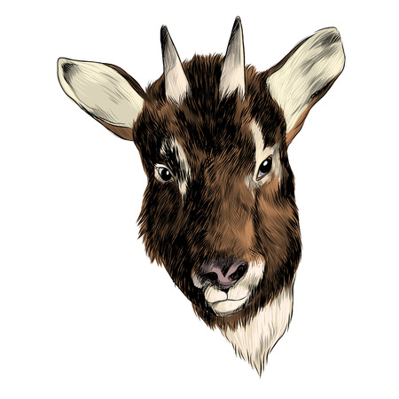 Goral goat sketch graphic design. Иллюстрация